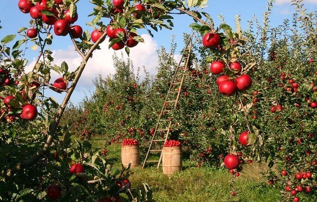 homeopatia pre záhradu