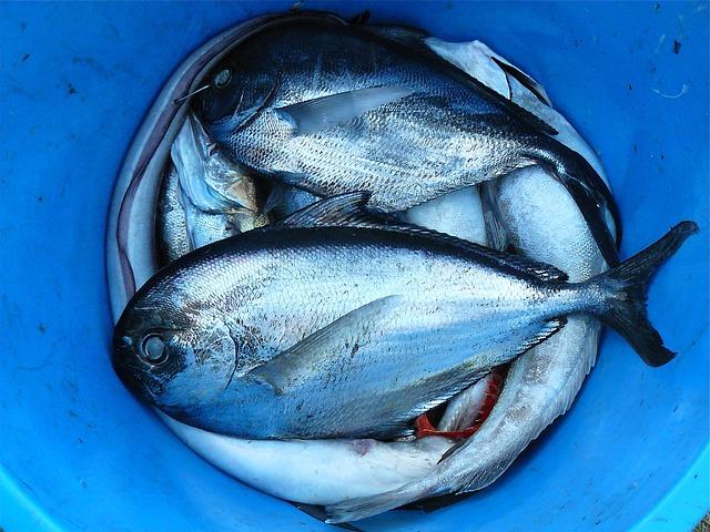 chov rýb a homeopatia