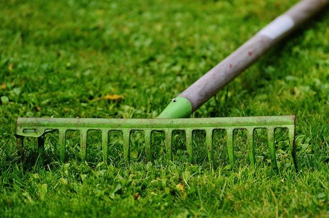 homeopatické rady pre vašu záhradu