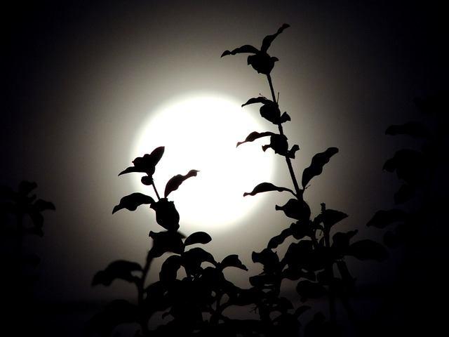 nočné desy u detí