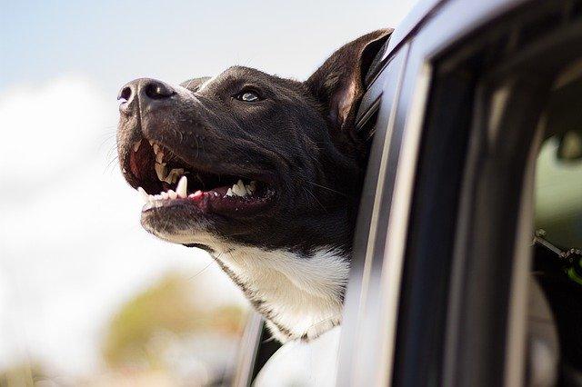 zubné problémy u psov