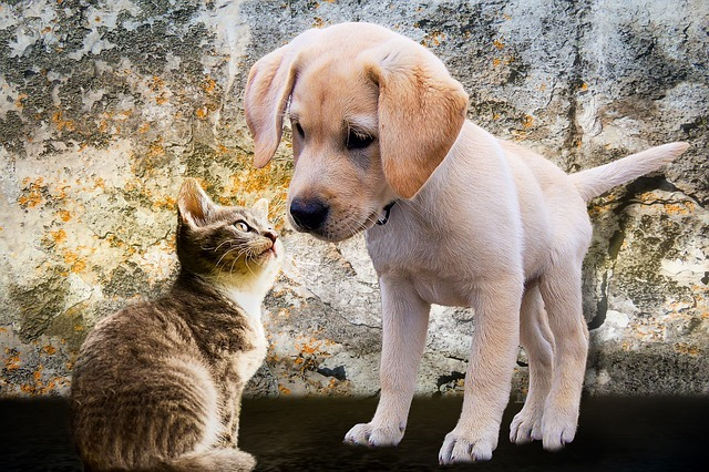 veterinárna homeopatia - prípady z praxe