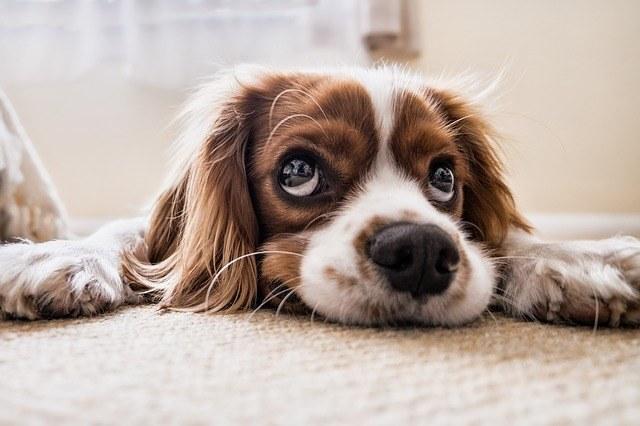 veterinárna homeopatia pripady z praxe