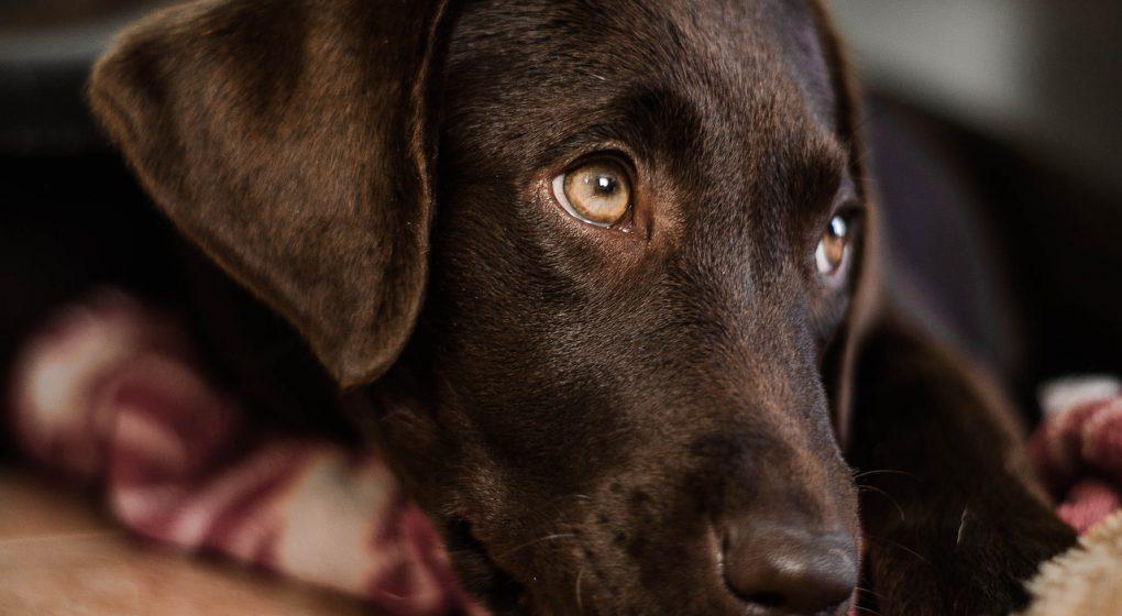 zvracanie a poruchy trávenia u psov