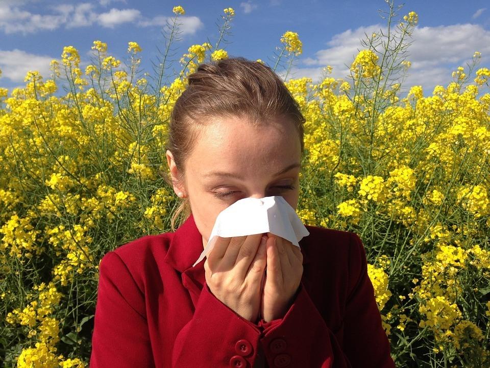 alergia, senná nádcha